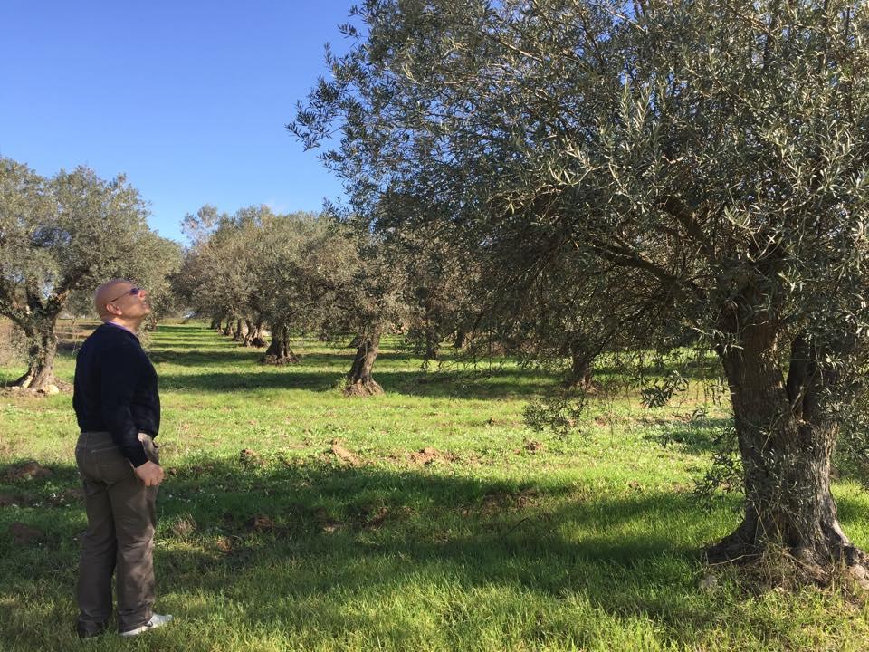ロルイ オリーブの木とルイージ氏